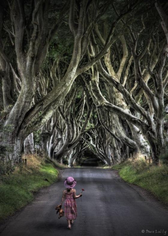 hetres-centenaires-Irlande-9