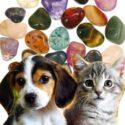 Focus sur notre formation en lithothérapie pour animaux