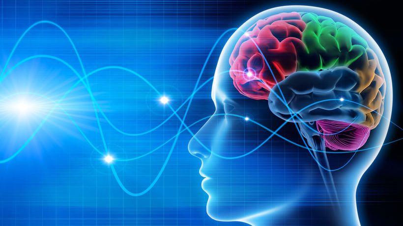 870x489_grafika-mozgu-czlowieka-396992-article